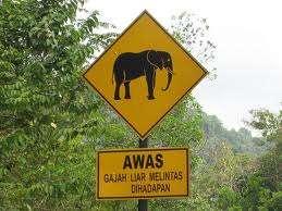 gajah melintas