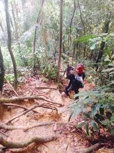 trail bukit kutu