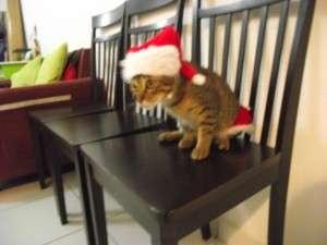 Dia bukan Bandar Kuching, dia haiwan kucing (Saya tak ada gambar muzium kucing huhu)